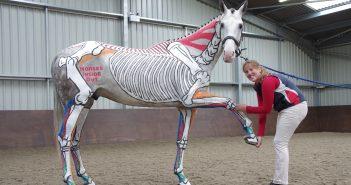 PATRONAT KZJ: Biomechanika ruchu konia z Gillian Higgins