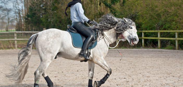 Headshaking syndrom – wiele koni poza opieką lekarza weterynarii