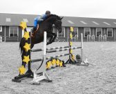USA: naukowcy na tropie idealnego podłoża dla koni sportowych