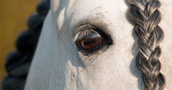 Kwasy omega-3 dla zdrowia końskich oczu