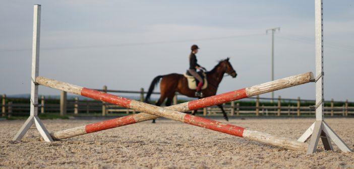 Ochraniacz wykryje kulawiznę konia