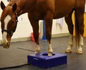 Tomografia na stojąco, czyli przełom w diagnozowaniu koni