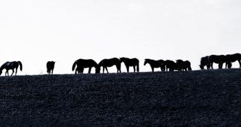 Znamy liczbę koniowatych i ich właścicieli: statystyki 2018