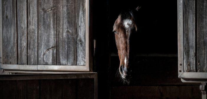 Uwaga! Groźna grypa u koni
