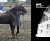 USA: Koniec z okrucieństwem wobec koni