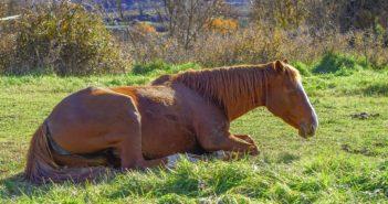 Bezsenność koni – niedoceniany problem, realne zagrożenie dla zdrowia