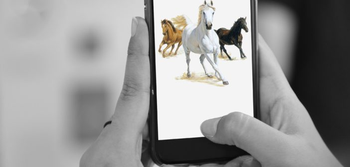 Weterynaryjny WEBINAR dla miłośników koni