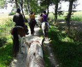 Zbyt ciężki jeździec? Naukowcy ocenią optymalne obciążenie dla koni