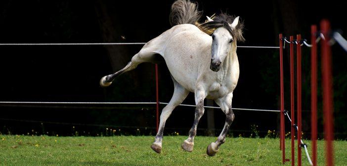 Typ konia ma wpływ na ryzyko wystąpienia problemów z przewodem pokarmowym