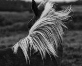 Czy koński włos stanie się źródłem komórek macierzystych?