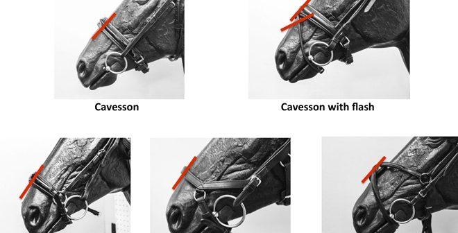 Duńska Federacja Jeździecka mówi NIE zbyt ciasno zapiętym nachrapnikom