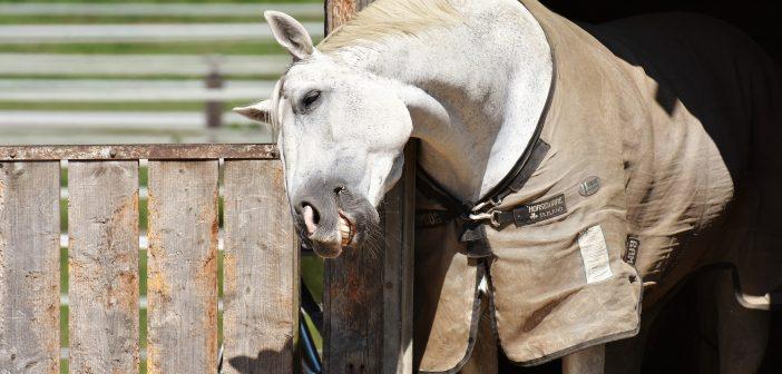Czy nowa forma podania leku przyniesie ulgę koniom z wrzodami?