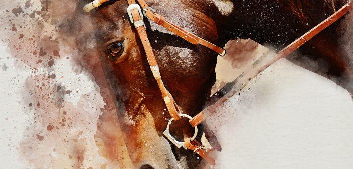 WYWIAD: Właściwe dopasowanie metod szkolenia do rozwoju konia jest sztuką